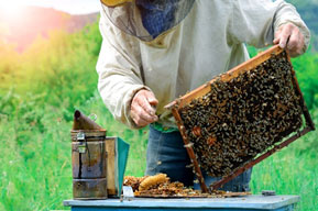 0ce721e9c3597 Choose a Location for Your Hive(s) - There is no simple answer regarding the  best place to put a hive, but most experts agree a sunny location is best.