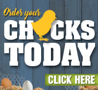 Chick Days - On Now