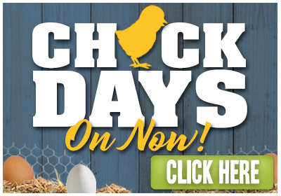 CHICK DAYS - On Now! - Click Here